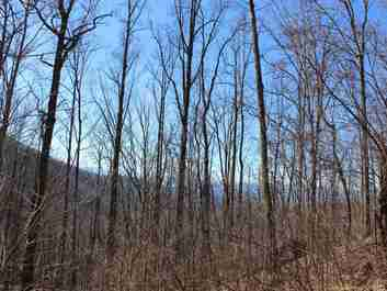 Lot 2 4 & G Webb Cove Road #2 4 & G in Asheville, North Carolina 28804 - MLS# 3278989