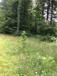 Lot 3 Jim Collins Road in Hendersonville, North Carolina 28791 - MLS# 3296889