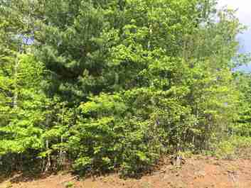 Lot 8 Whispering Pine Lane in Burnsville, North Carolina 28714 - MLS# 3392770