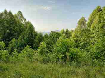 0 White Oak Road #0 in Waynesville, NC 28785 - MLS# 3400830