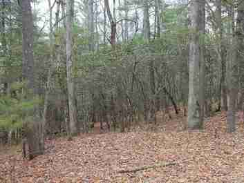 000 Wildlife Trail #1.16 ACRES in Hendersonville, NC 28739 - MLS# 3475823
