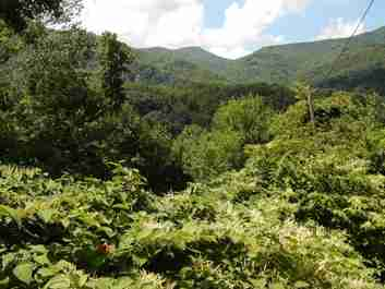 00 Rena Drive in Maggie Valley, NC 28751 - MLS# 3526904