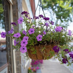 Photo of Flower Basket Hanging in Waynesville