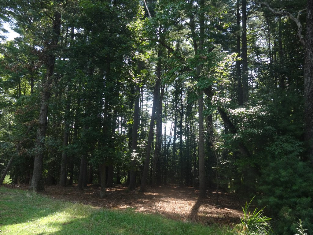 30 Cedar Hill Drive #Lot # 16 in Biltmore Forest, North Carolina 28803 - MLS# 3202401