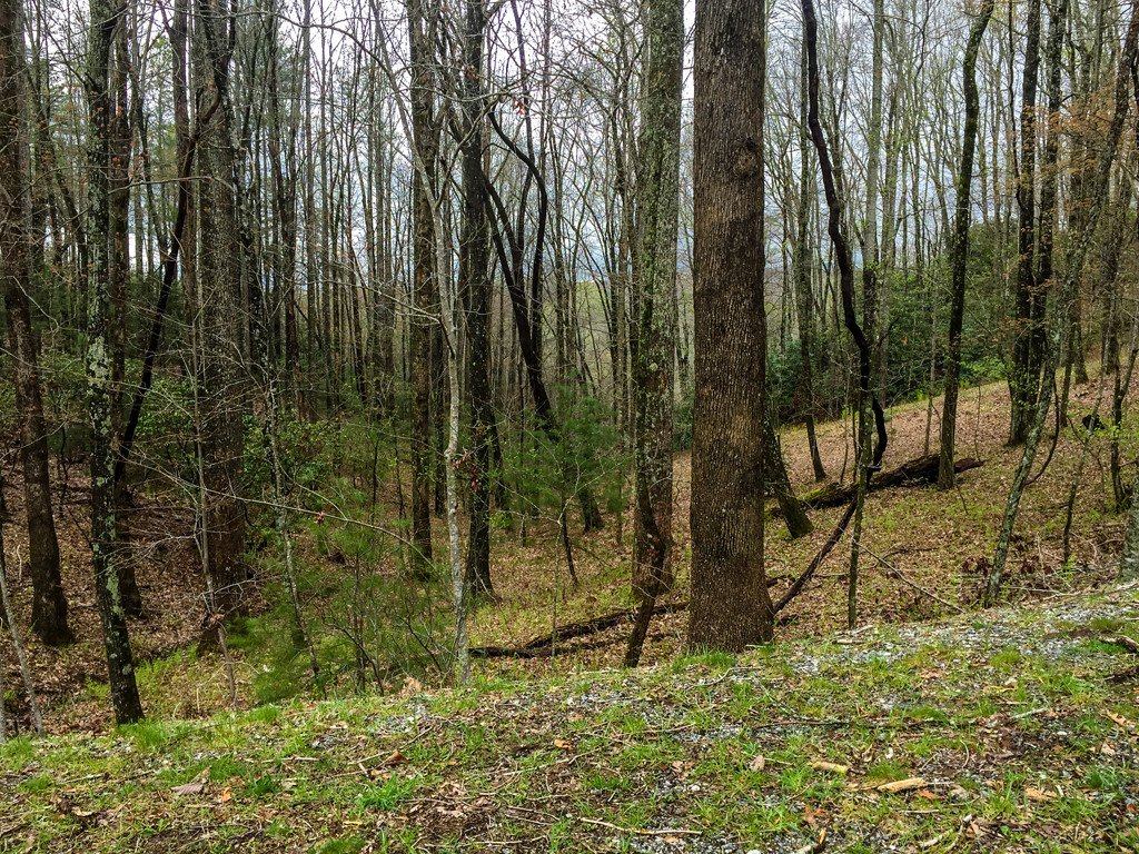 Lot 17a Usdasdi Drive in Brevard, North Carolina 28712 - MLS# 3388106