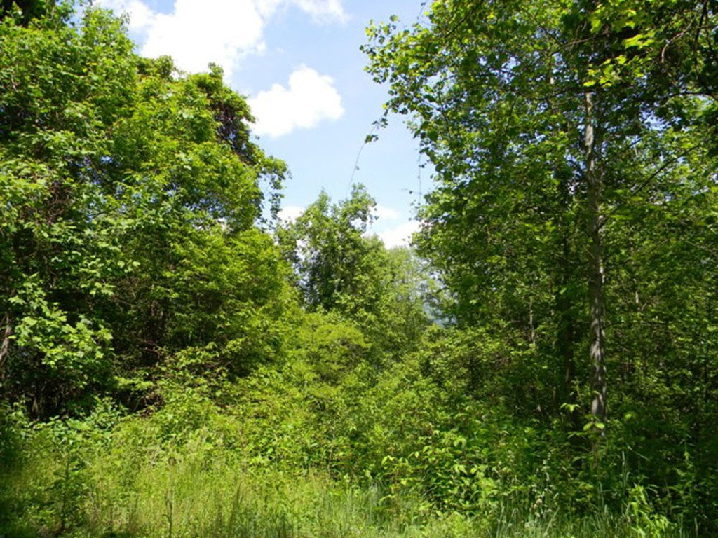 Lot 621 Kitty Lane in Waynesville, North Carolina 28785 - MLS# 3395719