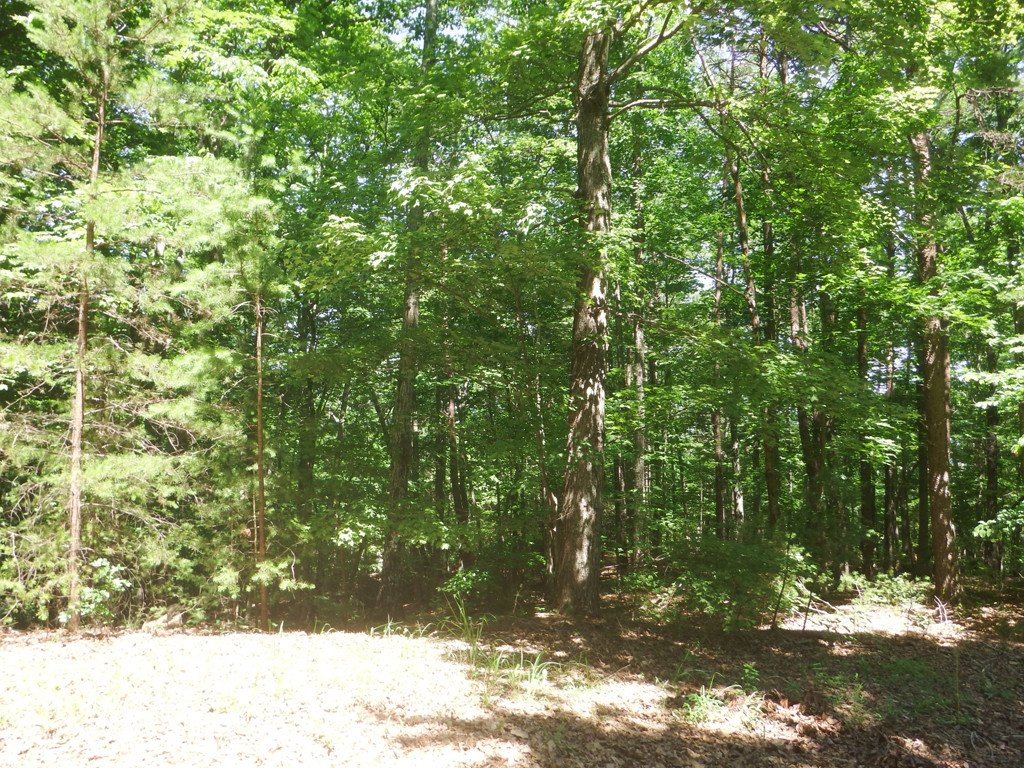 Lot 8 Whitney Boulevard in Lake Lure, North Carolina 28746 - MLS# 3407697