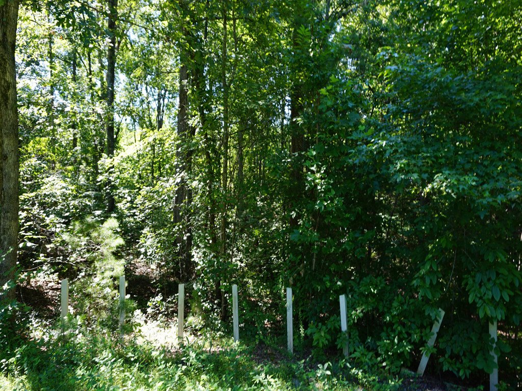 Lot 62 Bramblewood Drive #62 in Lake Lure, North Carolina 28746 - MLS# 3412572