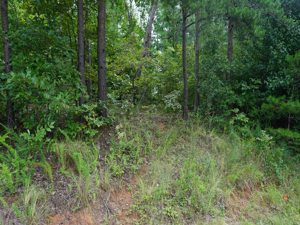 Lot 5 Mcintosh Circle in Lake Lure, North Carolina 28746 - MLS# 3431509