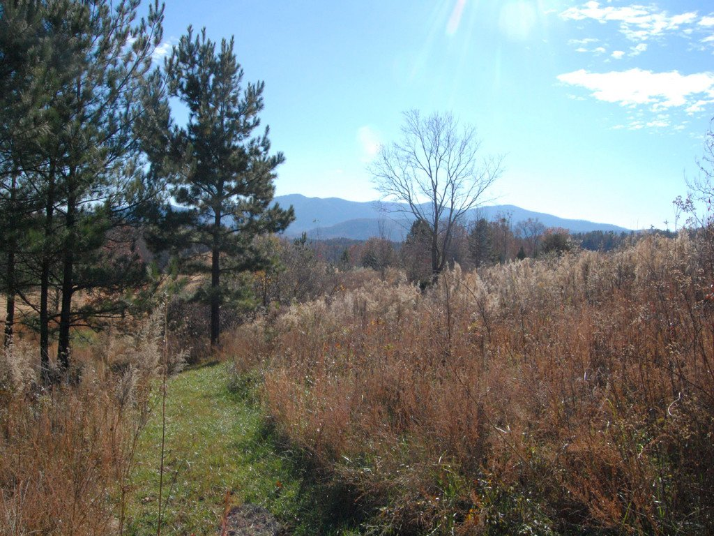 Lot 128 Deep Gap Road in Mill Spring, North Carolina 28756 - MLS# 3455983